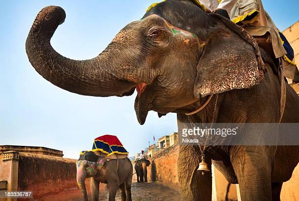 インド、ジャイプールの象
