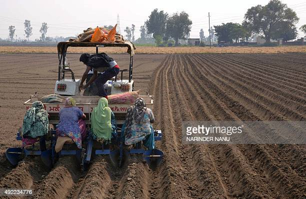 Indian farm labourers plant potato seeds on a farm on the outskirts of Amritsar on October 11 2015 Labourers earn about 250 INR per day for eight...