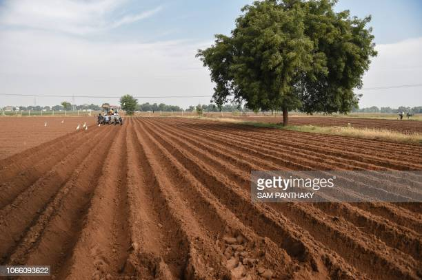 Indian farm labourers plant sliced potatoes at a field in Isanpur village some 40 km from Ahmedabad on November 28 2018 Dehgam and Deesa regions of...