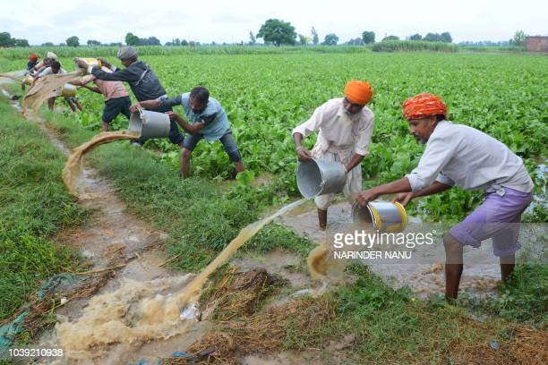 Indian farm labourers remove rain water from a flooded spinach field after heavy rains on the outskirts of Amritsar on September 24 2018
