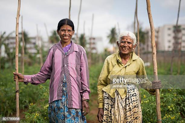 indian farm worker growing tomatoes. - karnataka stock pictures, royalty-free photos & images