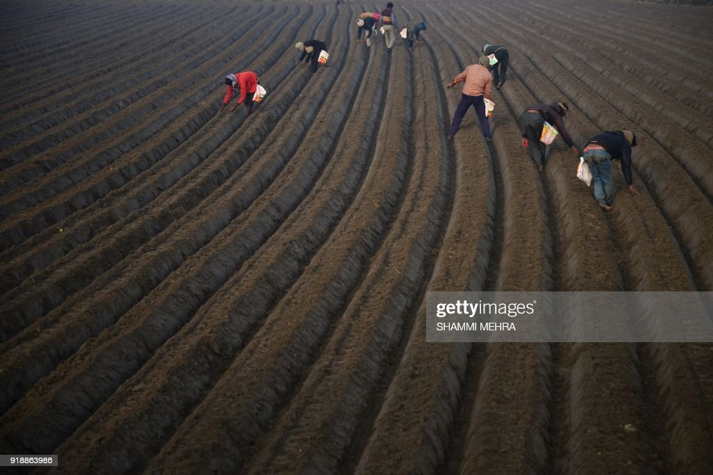 TOPSHOT-INDIA-ECONOMY-AGRICULTURE : News Photo