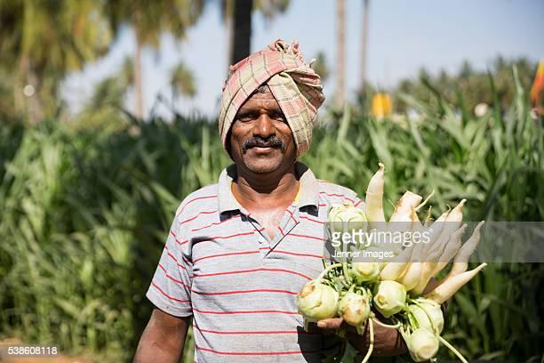 Indian Farmer harvesting Radishes.