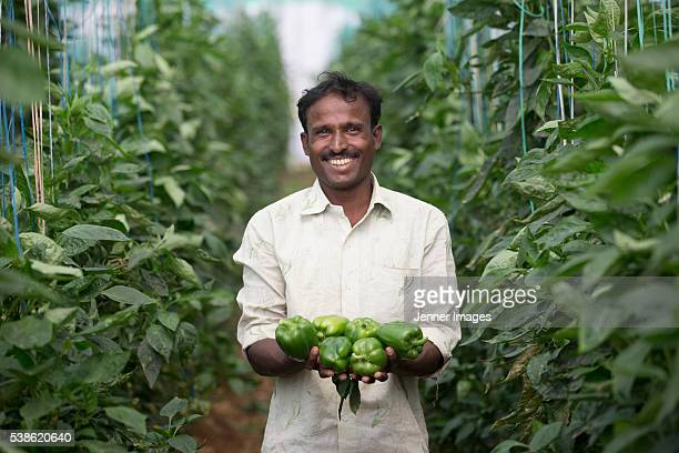 indian farmer holding freshly picked capsicum's. - indian ethnicity stock pictures, royalty-free photos & images