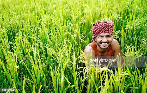 Indian Farmer in Rice Field