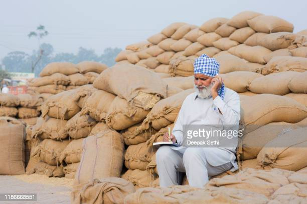 indian farmer - rye - grain market in punjab- stock photos - punjab india stock pictures, royalty-free photos & images