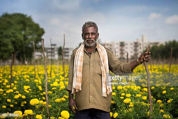 Indian farmer standing in a field of Marigold plants.