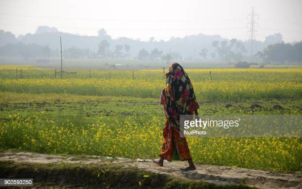 Indian farmer walk past a vegetable field in North 24 Pargana district 20 km from Kolkata India on Monday 8th January 2018