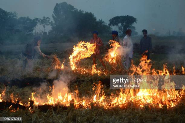 Indian farmers burn rice straw after harvesting the paddy crops in a field on the outskirts of Amritsar on November 11 2018 Smog levels spike during...
