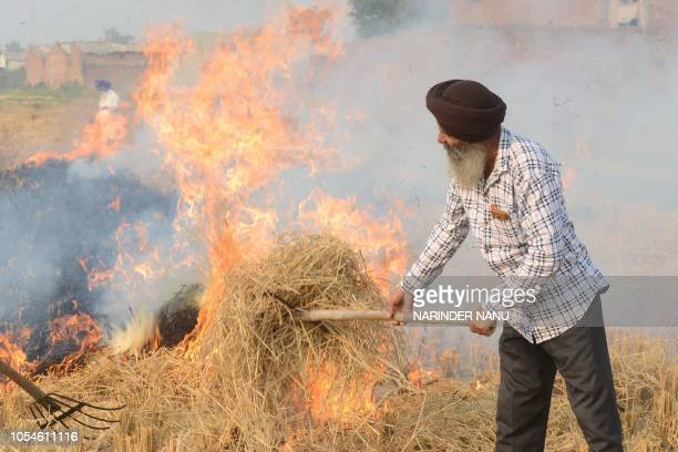 Indian farmers burn rice straw after harvesting the paddy crops in the fields on the outskirts of Amritsar on October 28 2018