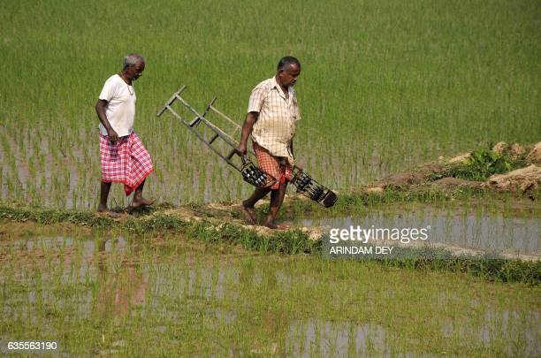Indian farmers carry their tools as they work in a paddy field in the village of Anandanagar on the outskirts of Agartala on February 16 2017 / AFP /...