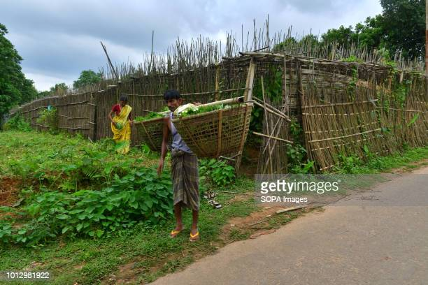 Indian farmers seen working in a Paan field locally known as Paan in Agartala Varieties of paan are produced here like Bangla Paan Lanka Paan and...