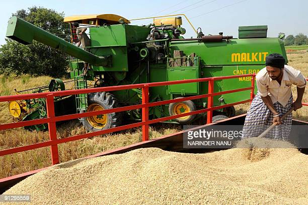Indian farmers use a combine harvester to harvest a crop of rice on the outskirts of Amritsar on September 30, 2009. The northern Indian state of...