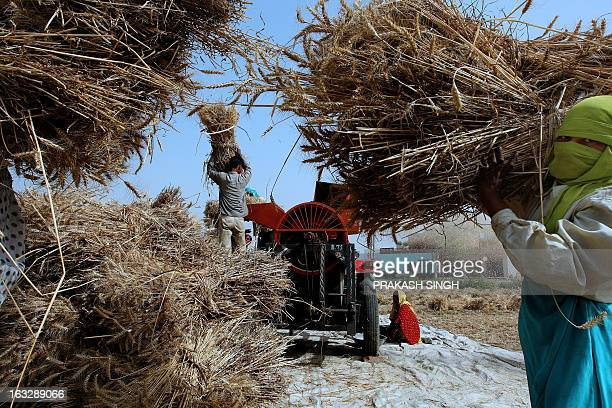 Indian farmers use a machine to process wheat in a field in Ghaziabad some 35kms east of New Delhi on April 23 2008 The Indian government has decided...
