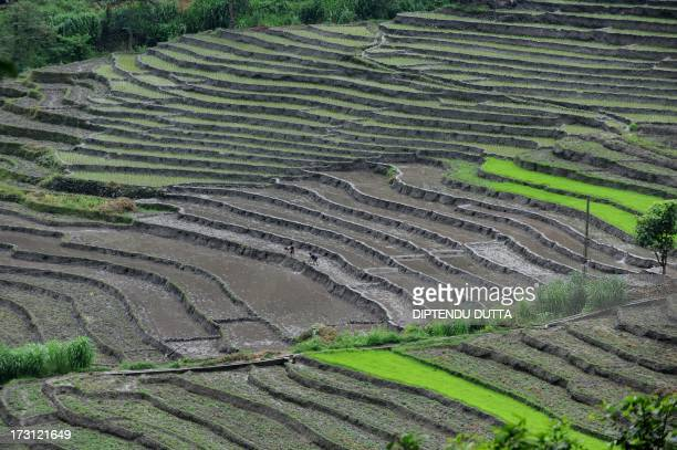 Indian farmers work in a field at the village of Kitang outside Gangtok the capital of the northeastern state of Sikkim on July 7 2013 Over 70...