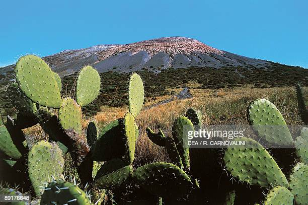 Indian fig Opuntia cactus plants on a landscape Vulcano Island Aeolian Islands Sicily Italy