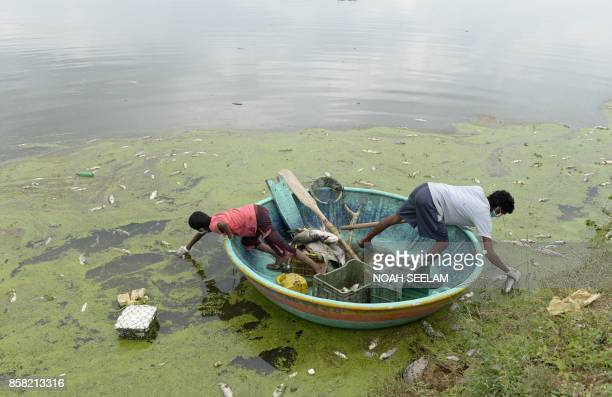 TOPSHOT Indian fishermen collect dead fish in Gandi Lake in Sangareddy district near Hyderabad on October 6 2017 Indian authorities said around 70 to...
