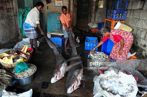 Indian fishermen pull sharks into an ice unit at a harbour in Chennai on June 5 as fishermen return with their catch after a 45day fishing ban on the...