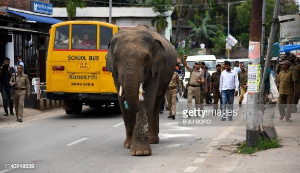 TOPSHOT Indian forest officials and police personnel try to chase away a wild male elephant at Hengrabari area in Guwahati on April 30 2019 A wild...