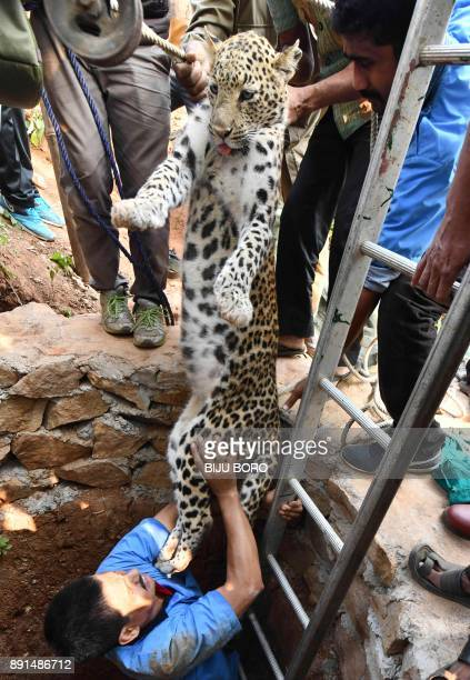 Indian forest officials rescue a leopard from a dry well after it was tranquilised in a residential area of Guwahati on December 13 2017 A leopard...