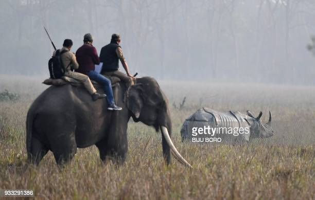 Indian forestry officials on an elephant look at a one horn rhino as they conduct a census of the endangered species at the Pobitora Wildlife...