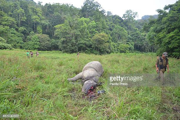 Indian forestry officials stand near the carcass of a onehorned rhinoceros which was killed and dehorned by poachers at the Burapahar area of Sundori...