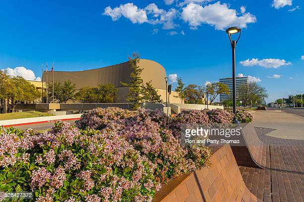indian hawthorne fills planter at lubbock memorial civic center (p) - lubbock stock pictures, royalty-free photos & images