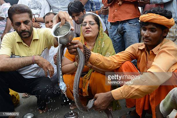 Indian Hindu devotees pour milk over a snake outside a temple in Amritsar on August 11 during the Hindu festival of Nag Panchami The festival which...