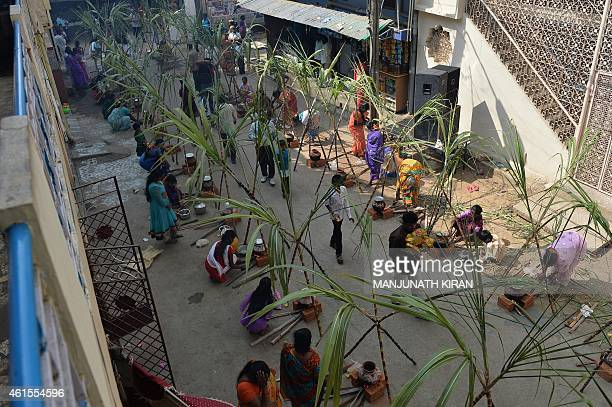 Indian Hindu devotees prepare Pongal a sweet preperation made with milk rice and jaggery during the Makara Sankranthi Festival celebrations in...