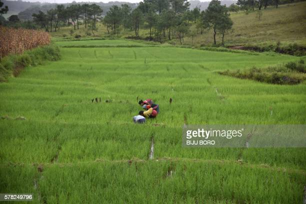 TOPSHOT Indian Jaintia tribalwomen work in a terrace field near Jowai town in the Jaintia Hills District about 44 kms from Shillong the capital of...