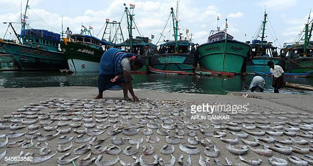 Indian labourer Lakshmi dries fish at the Kasimedu fishing harbour in Chennai on July 9 2016 Lakshmi earns approximately 45 USD per day drying fish /...