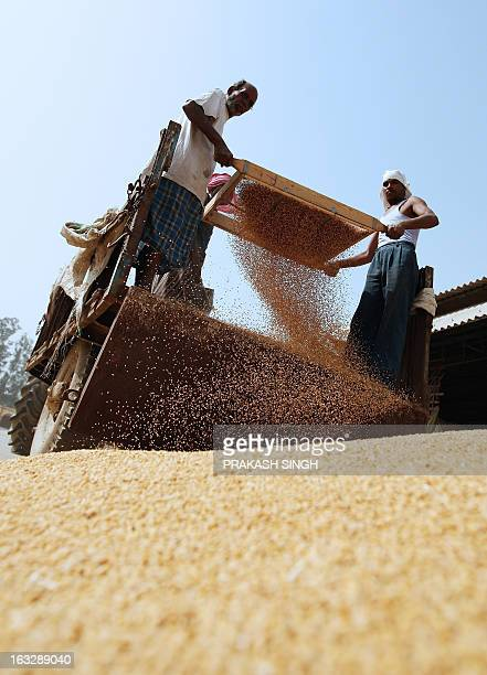 Indian labourers clean wheat at a wholesale grain market in Ghaziabad some 35kms east of New Delhi on April 23 2008 The Indian government has decided...
