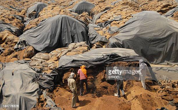 Indian labourers dig through rotting wheat at Khamano village 40 kilometres from Ludhiana on May 19 2012 The Indian government may export 45 million...