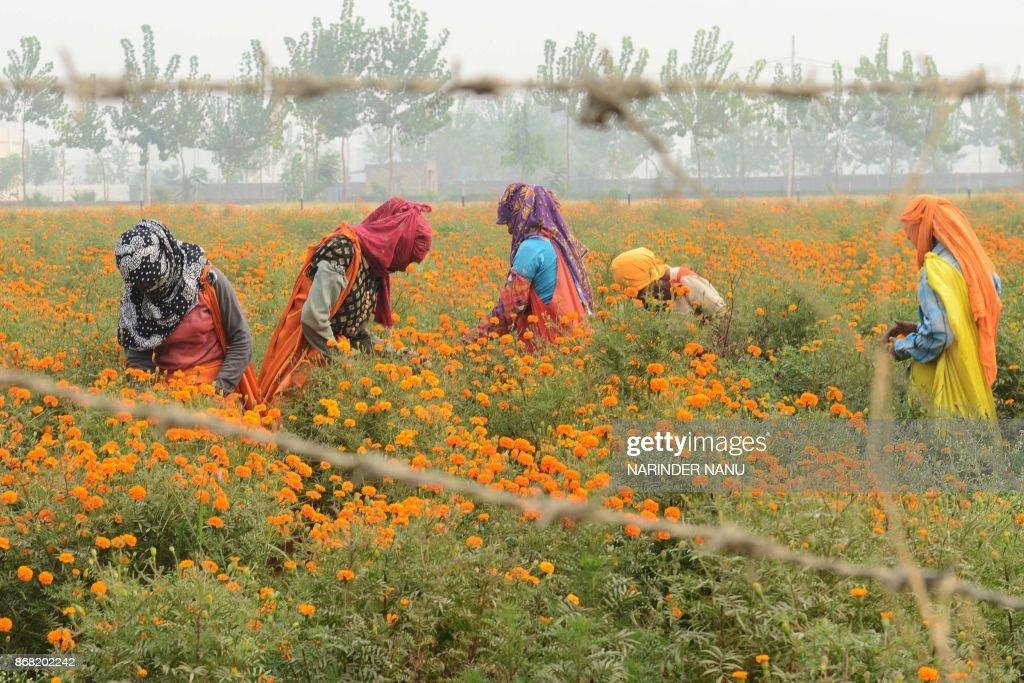 INDIA-ECONOMY-AGRICULTURE : News Photo