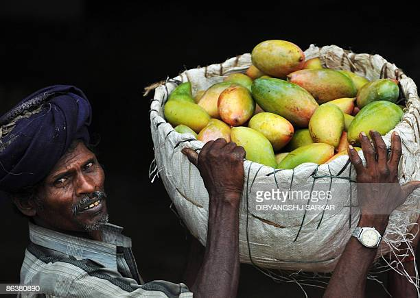 60 Top India Mango Pictures, Photos, & Images - Getty Images