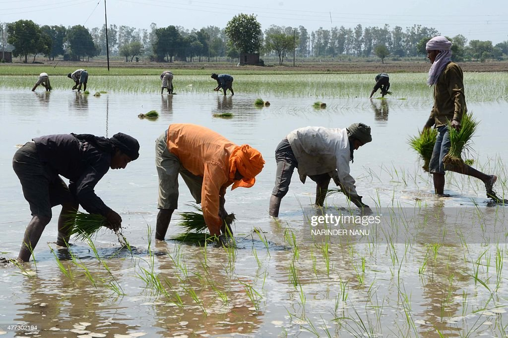 INDIA-ECONOMY-AGRICULTURE : News Photo
