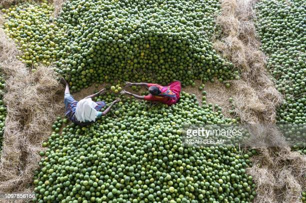 Indian labourers select 'Mosambis' fruits, also called sweet oranges, at Gaddiannaram fruit market on the outskirts of Hyderabad on February 11, 2019.