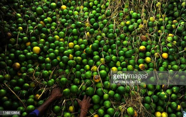 Indian labourers sort fresh sweet limes on the back of a truck at a market in Siliguri on May 25 2011 Prime Minister Manmohan Singh told African...