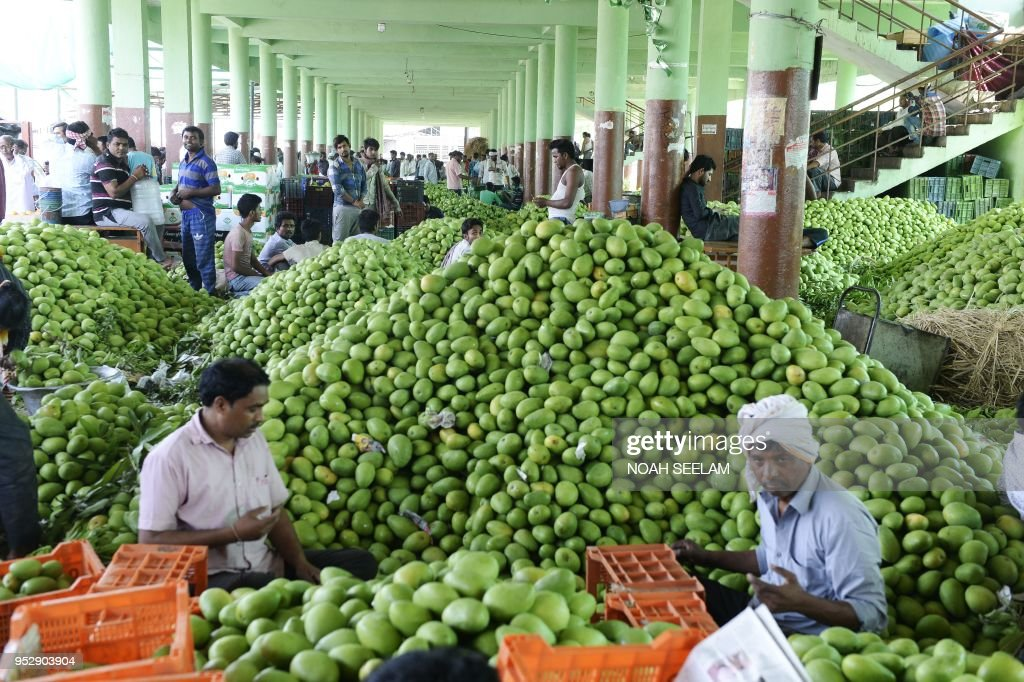 INDIA-ECONOMY-AGRICULTURE-MANGO : News Photo