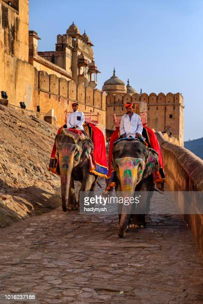 indian man (mahout) riding on elephant near amber fort, jaipur, india - amber fort stock pictures, royalty-free photos & images