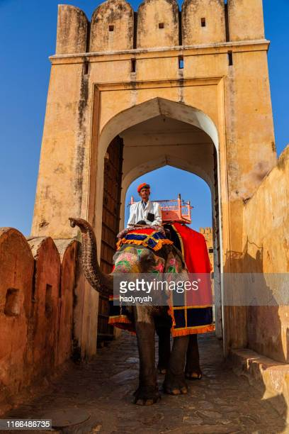 indian man (mahout) riding on elephant near amber fort, jaipur, india - indian elephant stock pictures, royalty-free photos & images