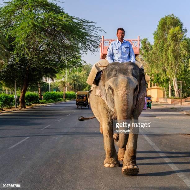 アンベール城、ジャイプール、インドの近くの象に乗ってインド人 (象)