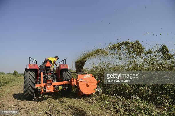 Indian members from the 'Tringgo' department use a mobile shredder as they shred the cotton crop in a field at Magodi village some 45 kms from...