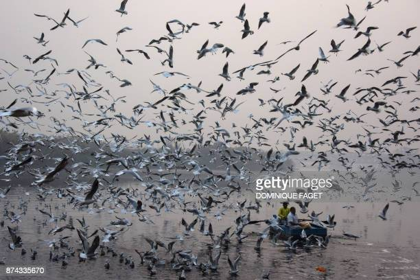 Indian men feed seagulls on the Yamuna River in New Delhi on November 15 2017 FAGET
