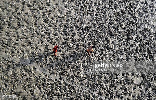 Indian men walk on river bed side of River Ganges as they carry holy water of River Ganges in pitcher made of mud after cremating the dead body of...