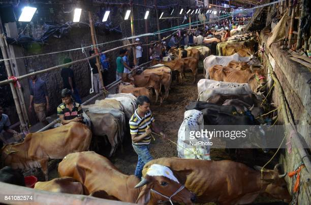 Indian Muslim men sales cow at a livestock market on the eve of the Eid alAdha festival in Kolkata India on Wednesday 30th August 2017 Eid alAdha...