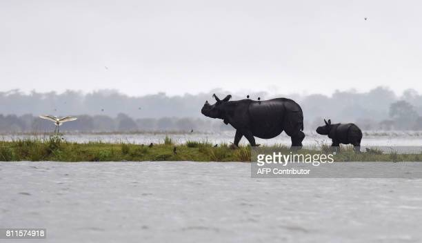 Indian onehorn rhinoceros take shelter from flood waters on higher land at Kaziranga National Park about 250 kilometres east of Guwahati on July 10...