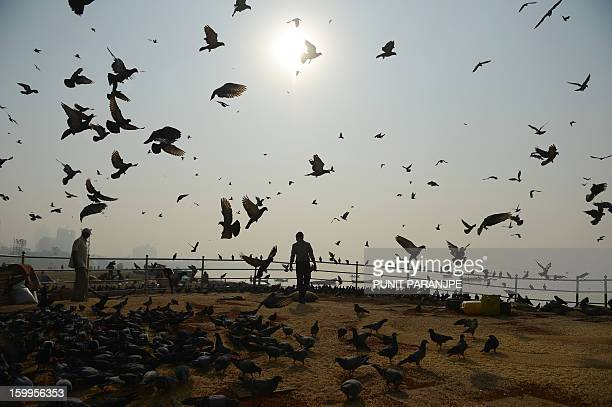 Indian people feed the pigeons in the early morning at Chowpatty beach in Mumbai on January 24 2013 India is experiencing galloping urbanisation part...