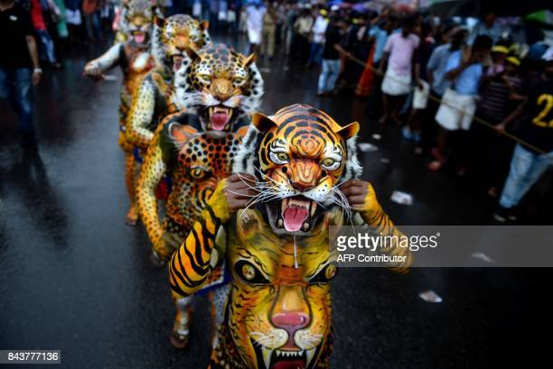 Indian performers painted as tigers take part in the 'Pulikali' or Tiger dance in Thrissur on September 7 2017 The folkart event is held every year...
