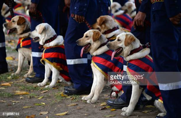 Indian police dog squad handlers stand with their dogs during a ceremony at India Gate lawns in New Delhi on April 4 2016 A new batch of 30 dogs all...